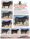 Peak Dot Ranch Bull & Female Sale Ad : click to enlarge